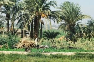 egypt_0029
