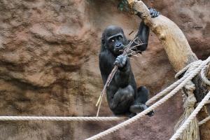 zoo11_0002