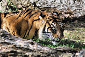 zoo11_0004