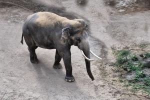 zoo11_0008