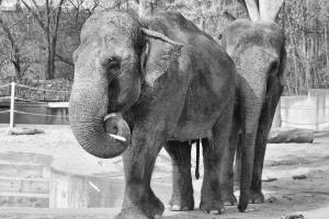zoo11_0009