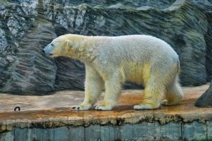 zoo11_0014