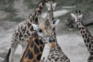 zoo11_0017