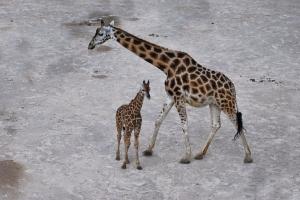 zoo11_0018