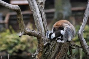 zoo11_0022